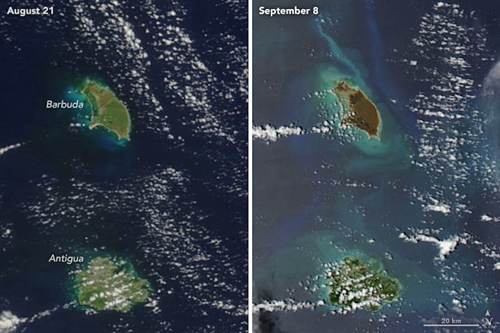 An image of Barbuda before Hurricane Irma shows green vegetation and after a dark brown. (Photo courtesy: NASA Earth Observatory)