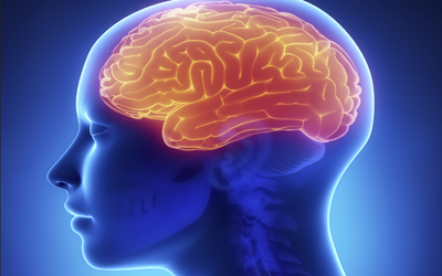 Keys Discovered to Female and Male Brains